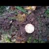 Schmuck und Münzen am Waldsee.