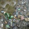 Fund einer steinzeitlichen Klinge im Bachbett (englisch)