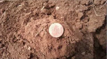 Schatzsuche: Münzfunde